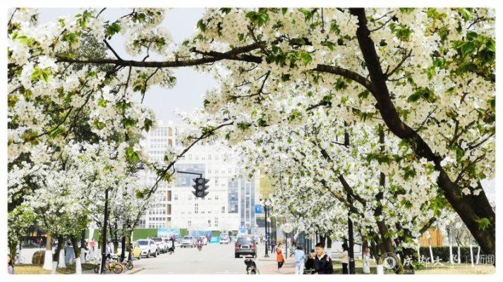 Xuân về Đh Thành Đô